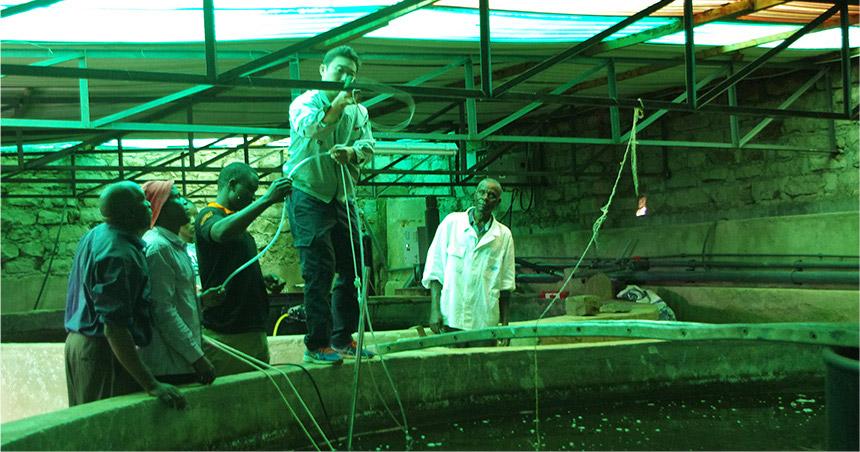ナノバブル水産養殖改善事業